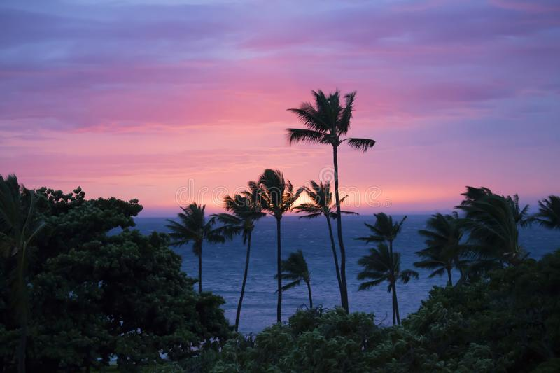 Sunset Sky over Ocean with Sun on Horizon and Palm Trees Silhouette in Foreground. Pink and purple sunset with sun dropping below horizon over ocean and palm royalty free stock image