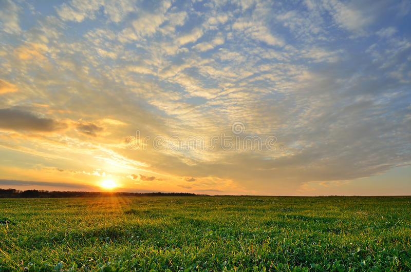Sunset sky and sun over the green field royalty free stock photography