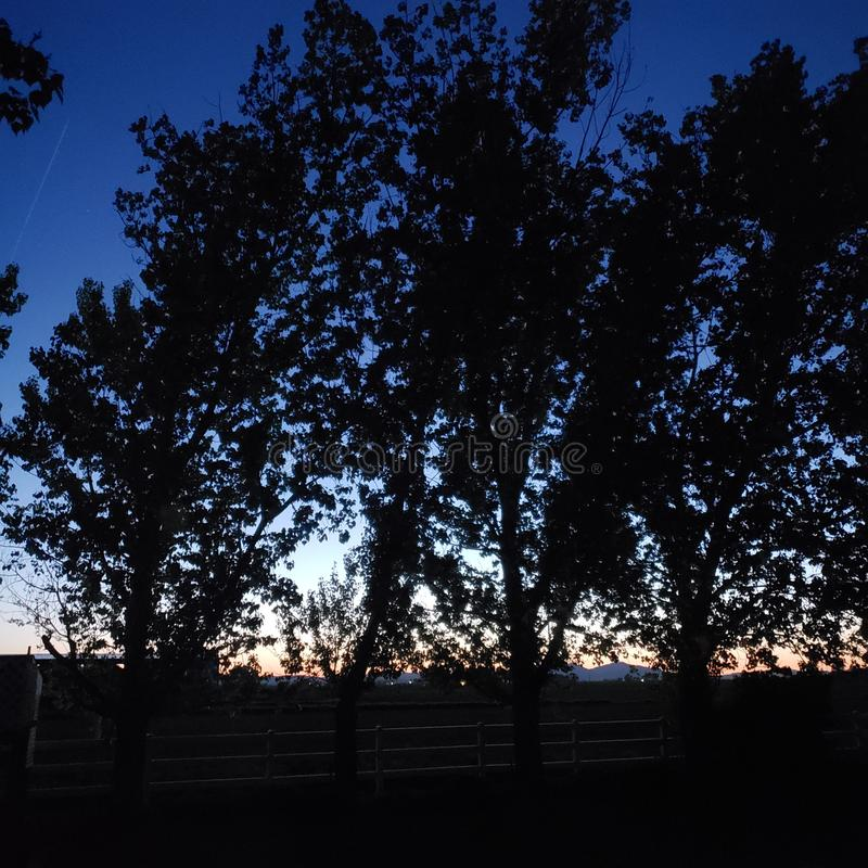 Sunset skyline through dark trees and fenceline stock photo