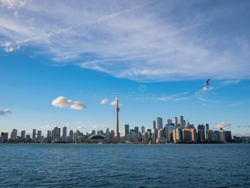 Sunset skyline of the Toronto city skyline with CN Tower and seagull flying. At Canada royalty free stock photo