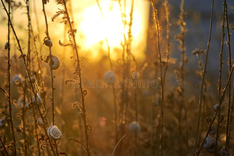 Sunset with small snail shell royalty free stock photo