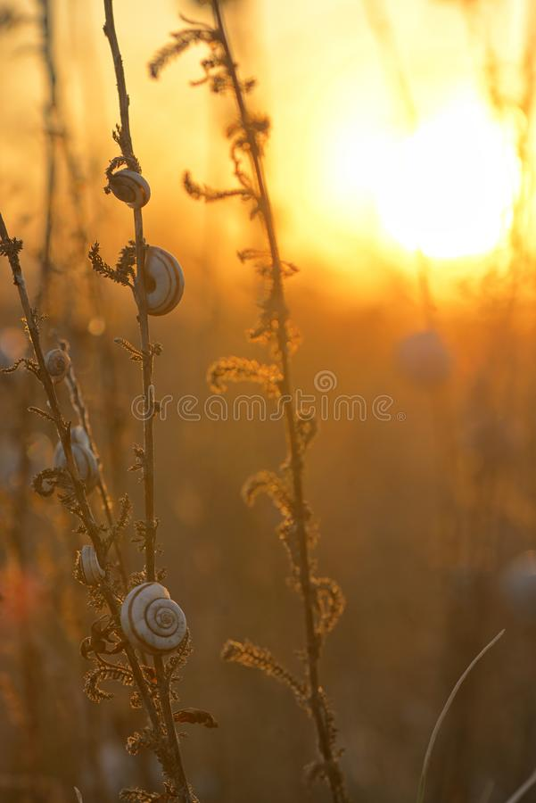 Sunset with snail shell on field royalty free stock photography