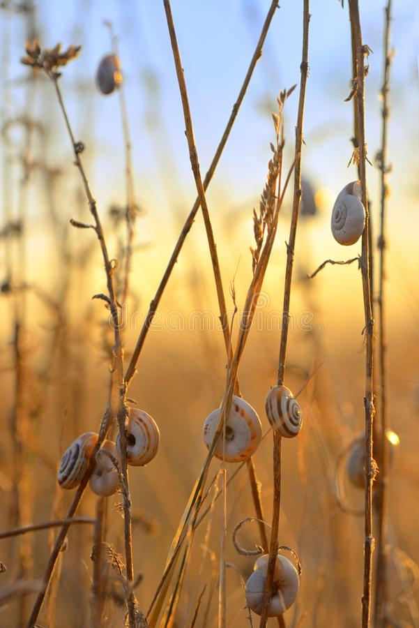 Sunset with snail shell on field stock images