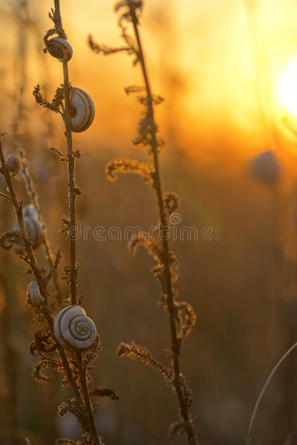 Sunset with snail shells stock photography
