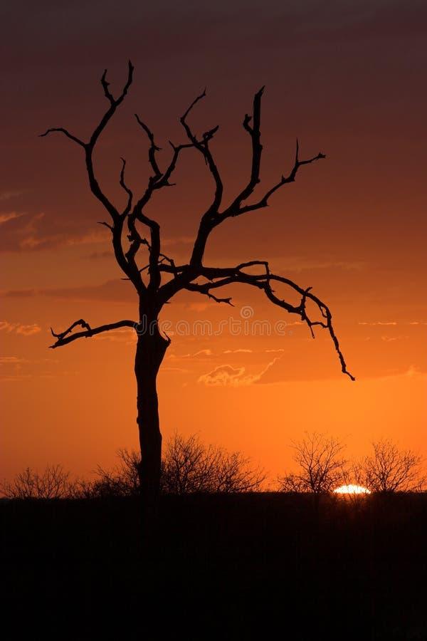 Sunset soft stock photos