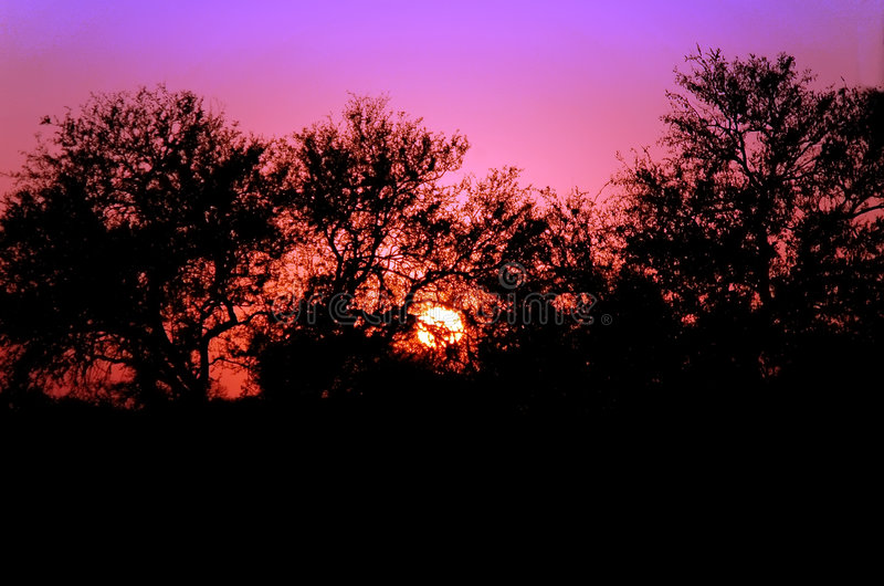 Download Sunset in South Africa stock photo. Image of park, south - 3745462