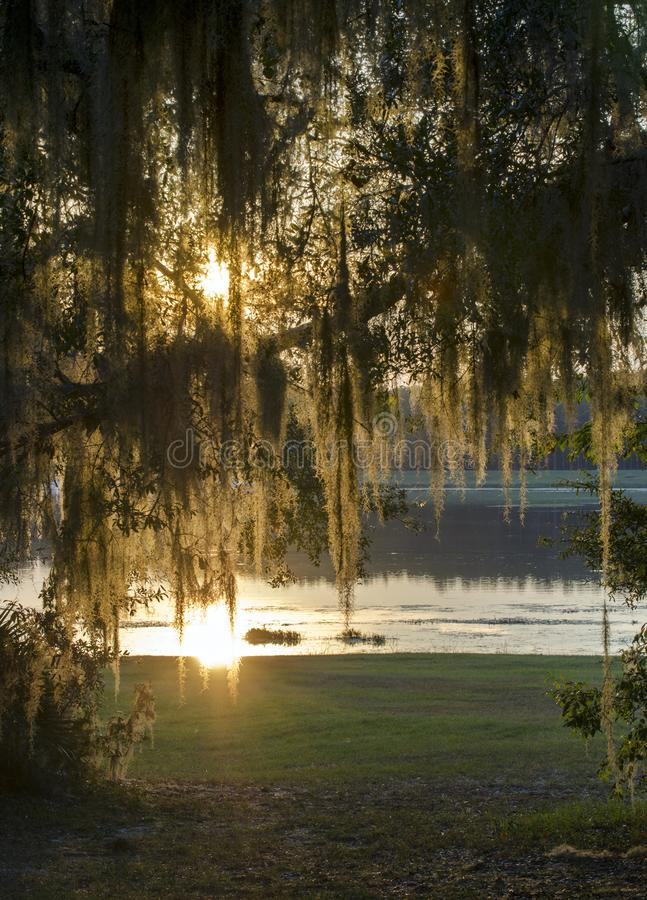 Sunset through Spanish Moss at Reed Bingham State Park. Sunset reflecting off the lake through Spanish Moss. Reed Bingham is a Georgia State Park in Colquitt royalty free stock photos