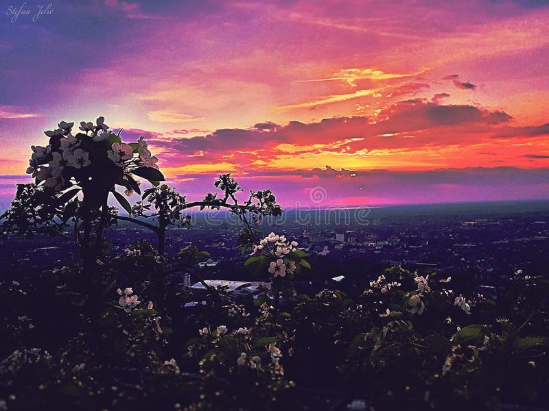 Sunset in wine town, red sky and flower stock image