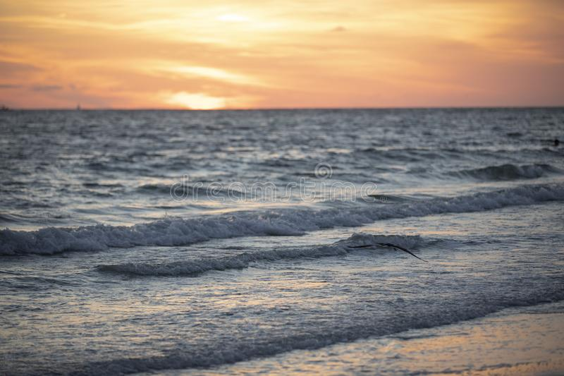 Sunset at St.Pete`s beach. With flying sea gull royalty free stock photos