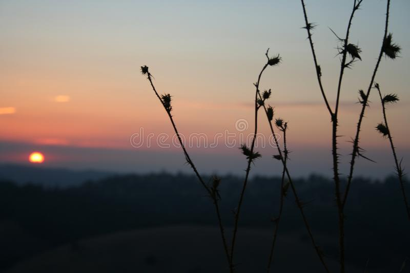 Sunset with star thistle in the foreground royalty free stock image