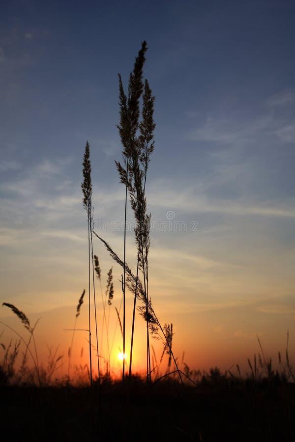sunset stepowy zdjęcia stock