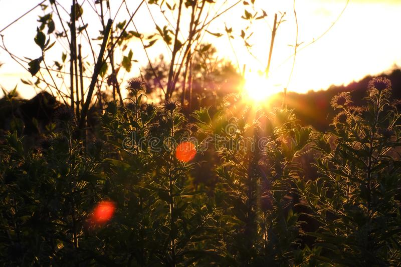 Sunset in suburbs, long low lightbeams. Some garden plants in low sunset sky. A few romantic blurs, warm tones royalty free stock photo
