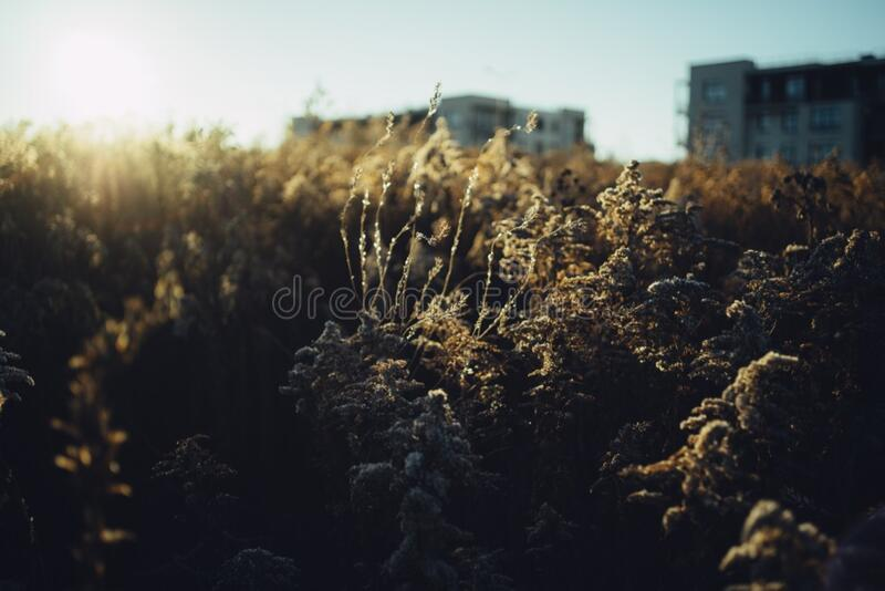 Sunset in suburbs royalty free stock photo