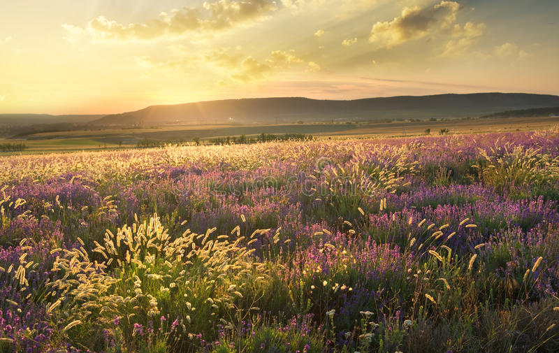 Sunset on summer mountain meadow. stock images