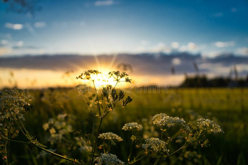 Sunset in Dutch landscape royalty free stock photo