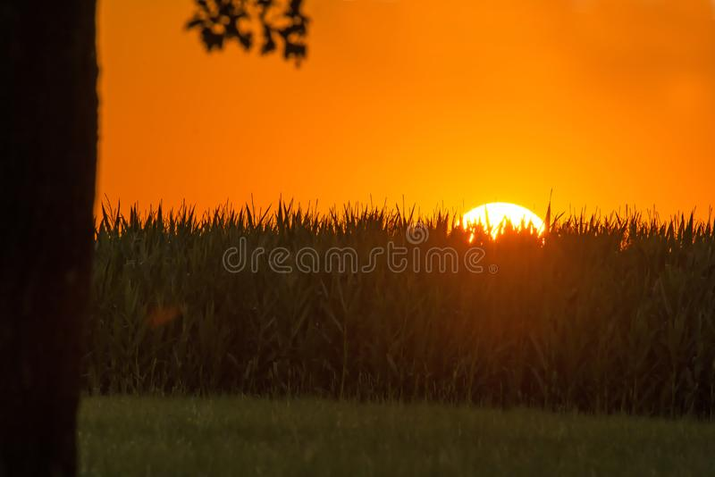 Sunset in summertime with field of corn royalty free stock images