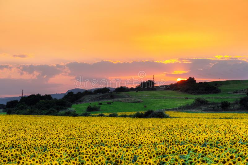 Sunset with sunflower royalty free stock images