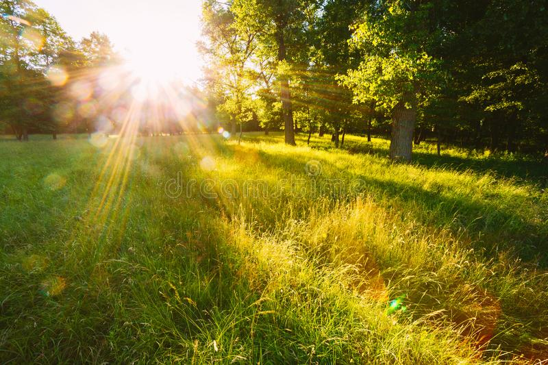 Sunset Or Sunrise In Forest Landscape. Sun Sunshine With Natural stock image