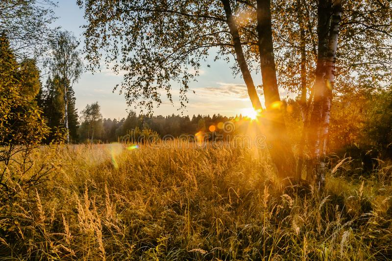 Sunset Or Sunrise In Forest Landscape. Sun Sunshine With Natural. Sunlight And Sun Rays Through Woods Trees In Summer Forest stock photo