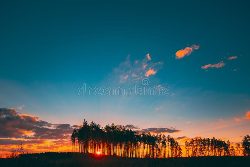 Sunset Sunrise in Pine Forest Sun Sunshine in Sunny Coniferous Forest Sunlight Shine through Woods in Landscape under arkivfoto