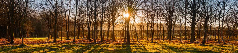 Sunset or Sunrise Through Trees Panorama Web Banner royalty free stock photos