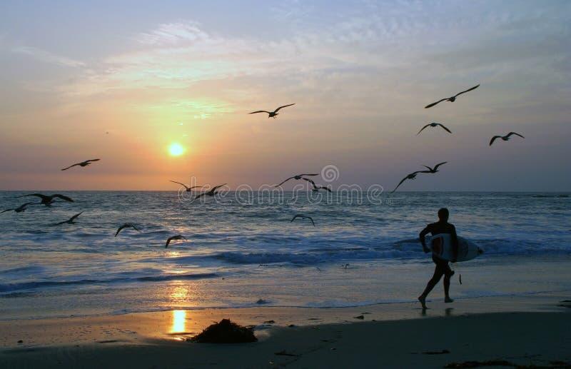 sunset surfera obrazy royalty free