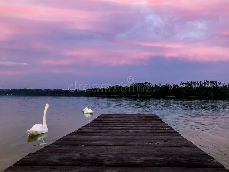 Sunset on the swan lake royalty free stock photography