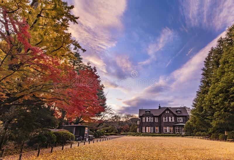 Sunset on Tokyo Metropolitan Park KyuFurukawa`s old western-style mansion at red maple momiji leaves season in autumn.  royalty free stock photo