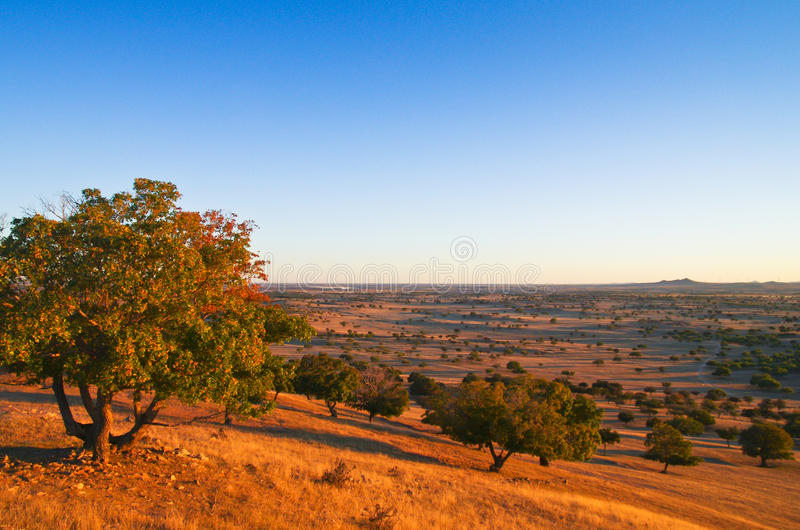Download Sunset tree stock image. Image of inner, magnificent - 26998435