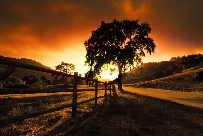 Sunset tree stock photography