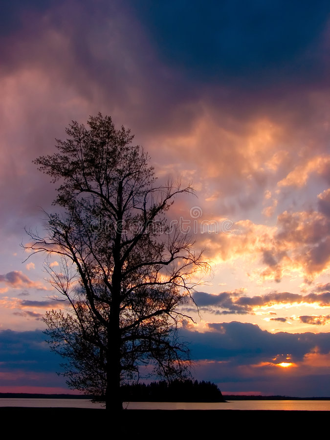 Download Sunset Tree Royalty Free Stock Photography - Image: 524997