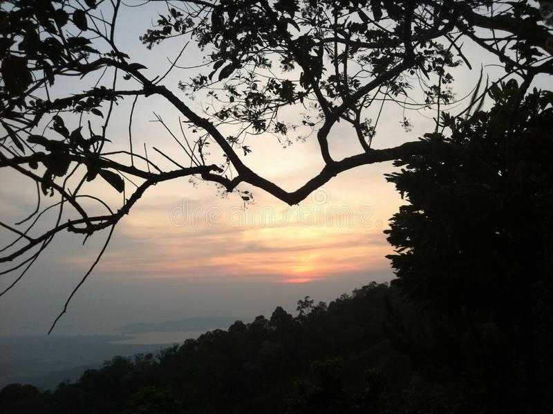 Sunset among tree branches in Kota Kinabalu, Malaysia royalty free stock images