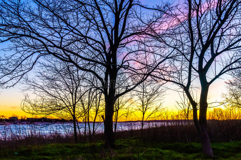 Sunset through a tree in Calvert Vaux Park. Brooklyn NY royalty free stock photography