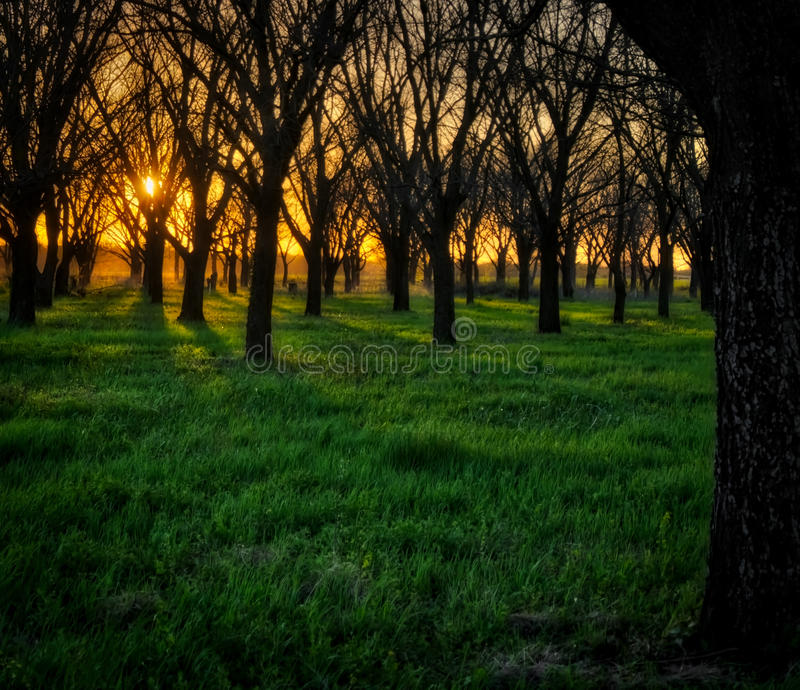 Sunset Trees stock photography