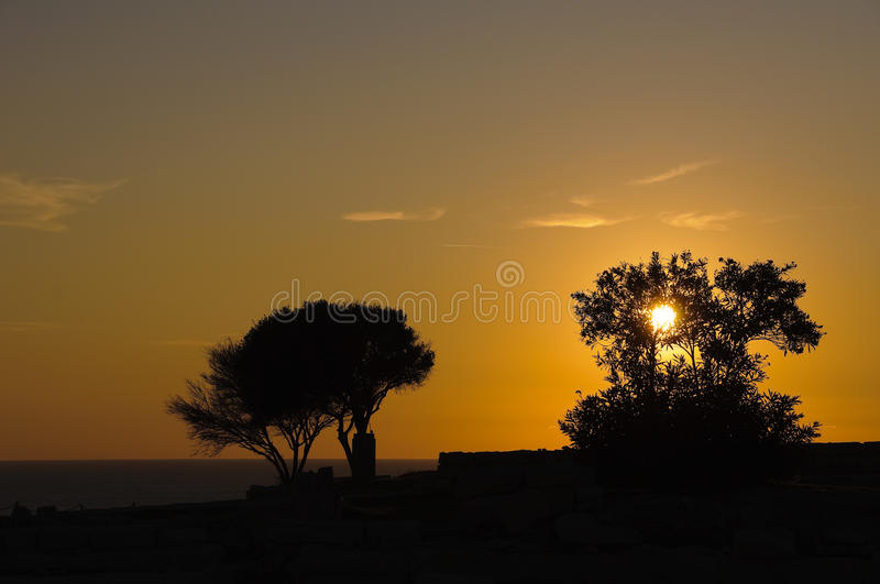 Sunset Trees Silhouettes Stock Photo