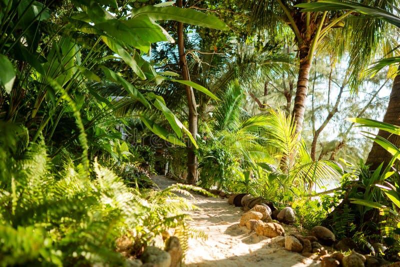 Sunset tropical jungle background stock image