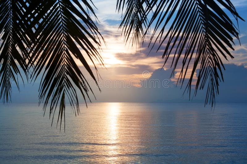 Sunset on tropical sea beach, palm tree leaves silhouette, beautiful cloudy sky background, golden sun glow reflection on water. Sunset on tropical sea beach royalty free stock photo