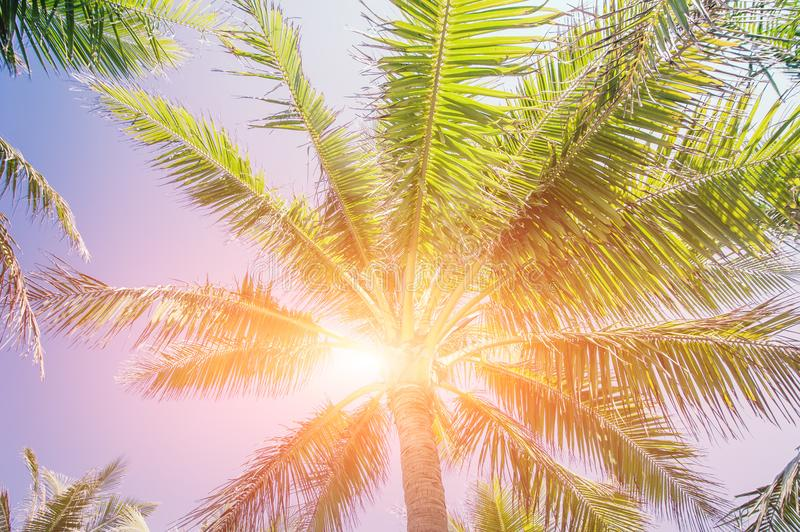 Sunset at tropics with palm trees against amazing colorful sky. Sun shining in leaves of tropical plant. Abstract summer travel background stock photo