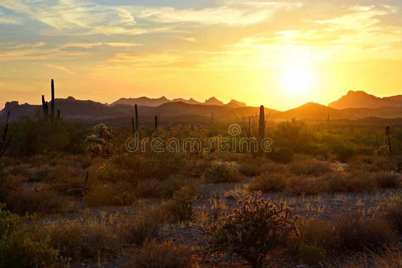 Sunset view of Arizona desert with cacti and mountains stock photography