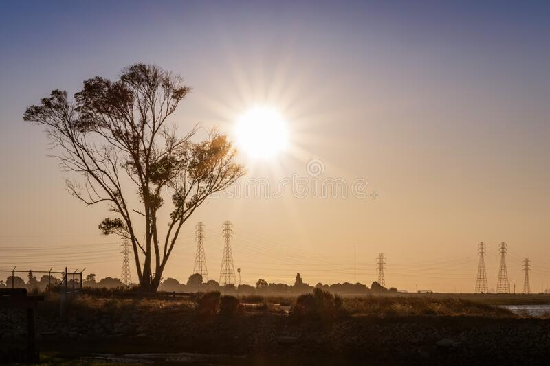 Sunset view of Eucalyptus tree growing on the shores of San Francisco Bay Area; California royalty free stock images
