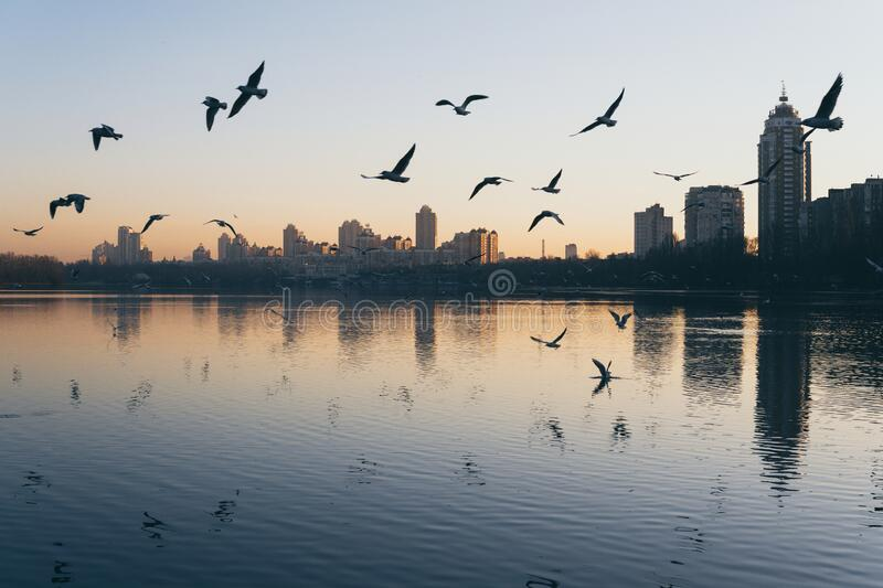 Sunset view of Obolon embankment in Kyiv, Ukraine. Birds flying on the foreground, reflection in water, city, town, cityscape, sunrise, light, panoramic, river stock images