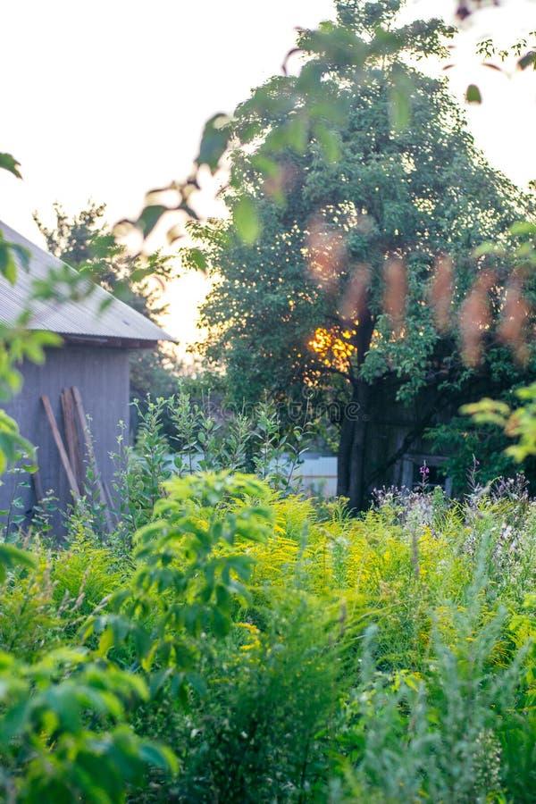 Sunset on the village garden. Wild trees and grass. Sunset on the village garden. Wild trees and grass stock photo