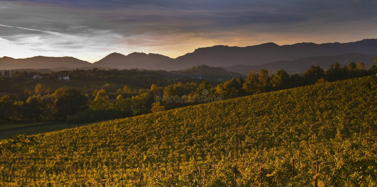 Download Sunset on vineyard stock photo. Image of fields, autumnal - 16291314