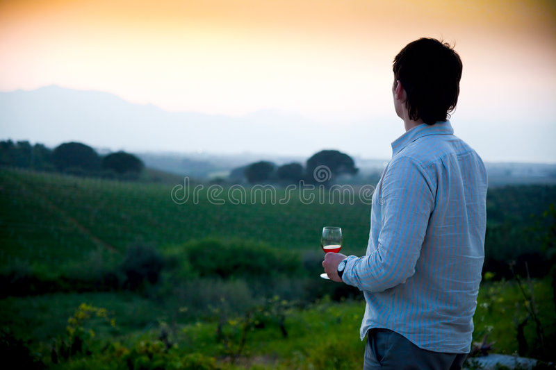 Download Sunset at vineyard stock photo. Image of view, sunset - 9064386