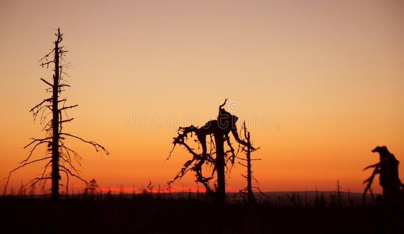 Sunset on Vottovaara mount. Republic of Karelia, Russia royalty free stock photography