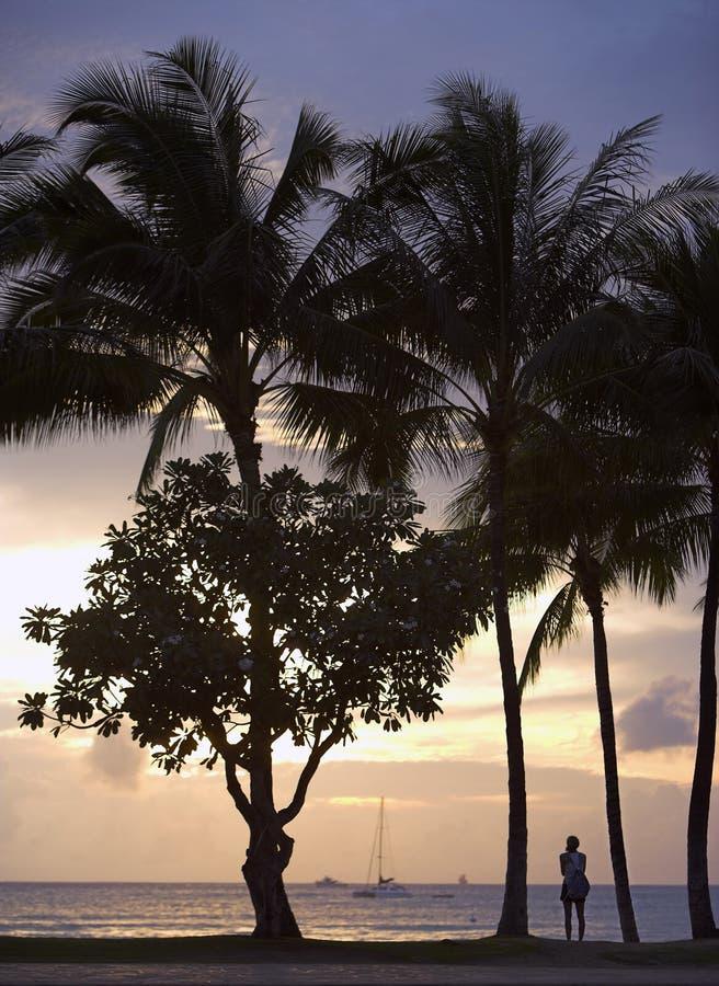 sunset waikiki beach zdjęcie stock