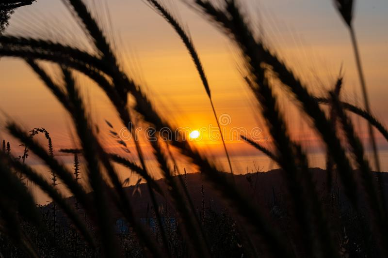 Sunset during walking in Nature stock photography