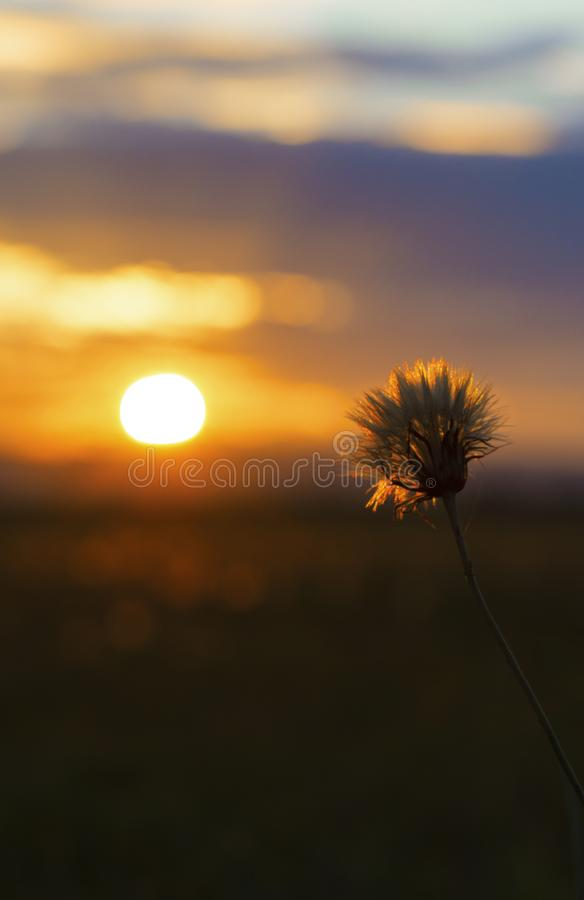 Sunset Wallpaper Background royalty free stock photography