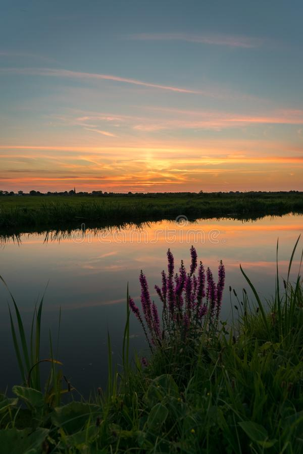 Colorful sunset over the dutch polder landscape near Gouda, Netherlands. Typical autumn wildflowers in the foreground. stock photo