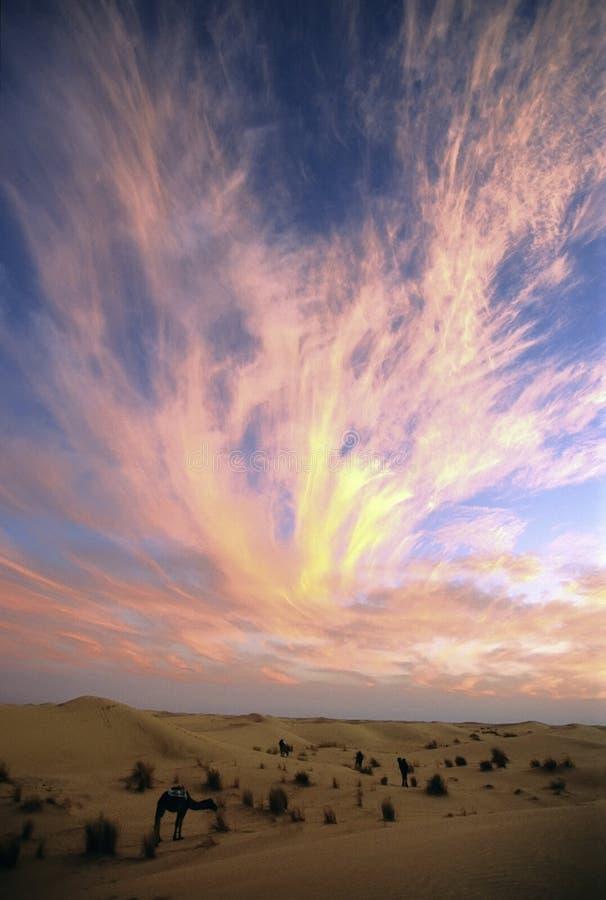 sunset wielbłąda, fotografia royalty free